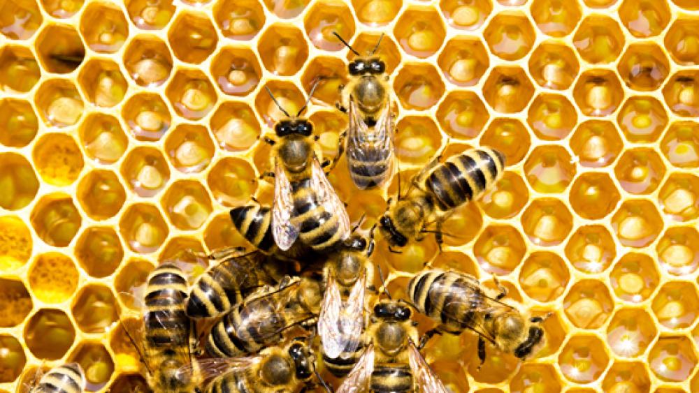Celebrating World Bee Day