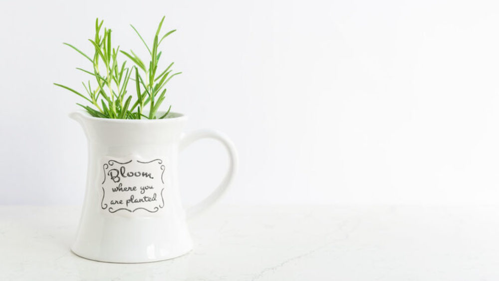 The Principles Of Gardening To Help Your SME Sector Grow